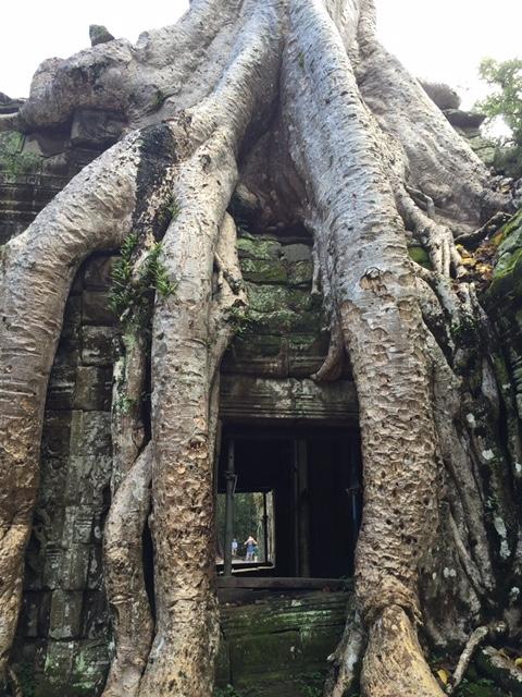 Fromagers_ont_envahi_temple_Ta_Prohm