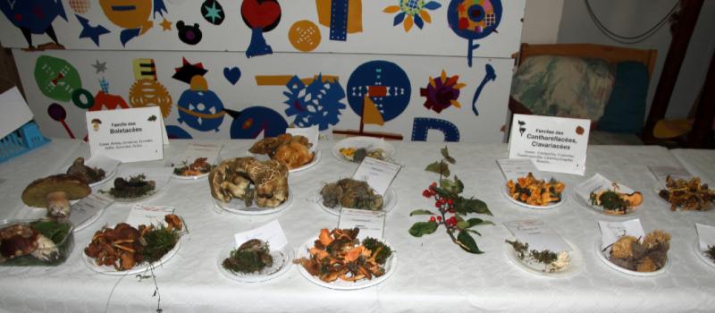 De Malherbe à Chamrousse : une exposition mycologique au cœur de la ville